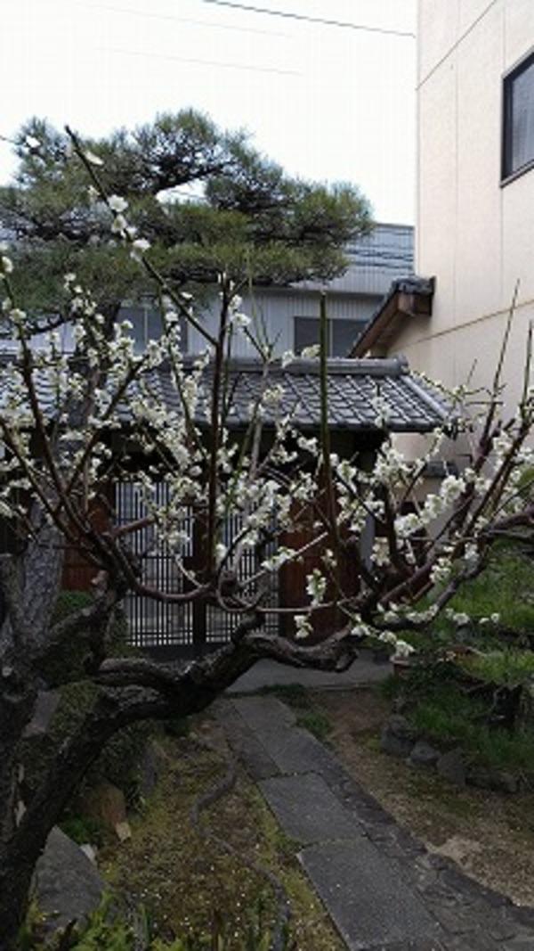 春の行事 第16弾「梅の装いまつり 倉敷カルチャー教室」